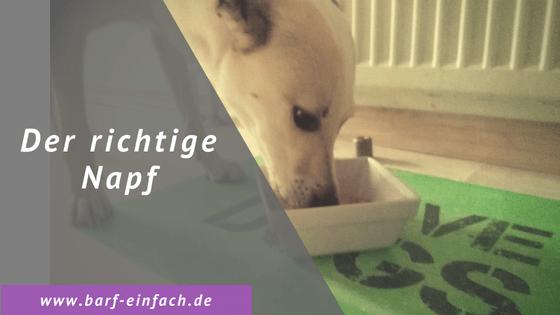 Hund, Napf