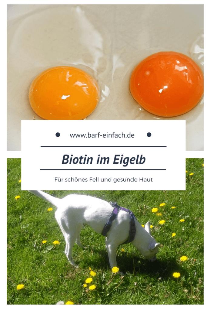 Eier, Eigelb, Hund auf einer Wiese