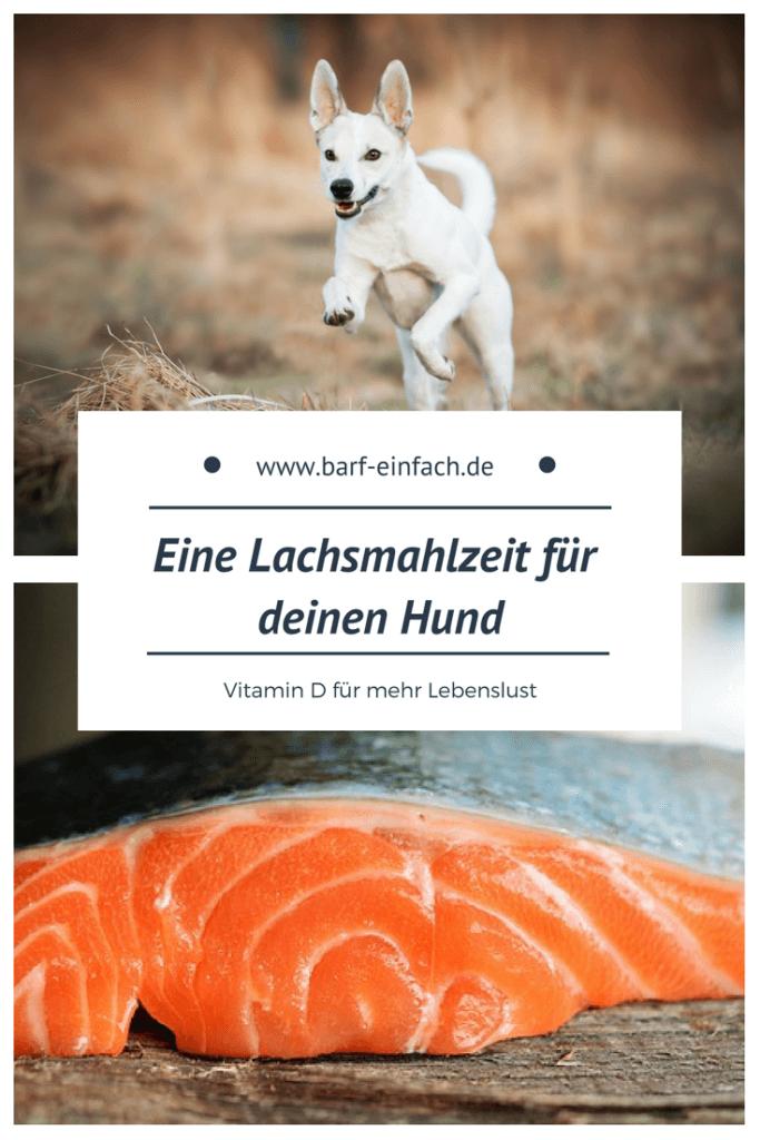 Rennender Hund, Fisch