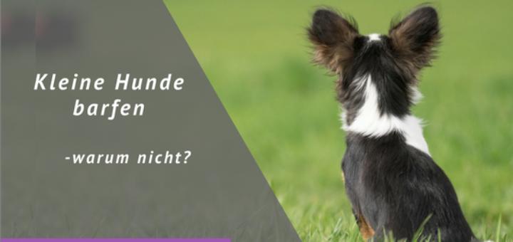 Hund, Wiese, Titel: Kleine Hunde barfen - warum nicht?