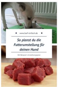 Futterumstellung auf Barf, fressender Hund, Fleisch