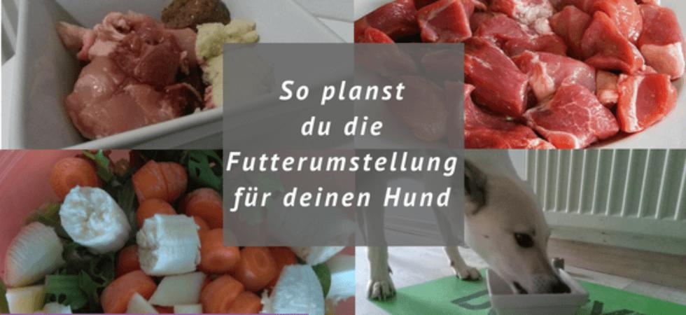 Futterumstellung Barf, Fleisch, Gemüse, Hund