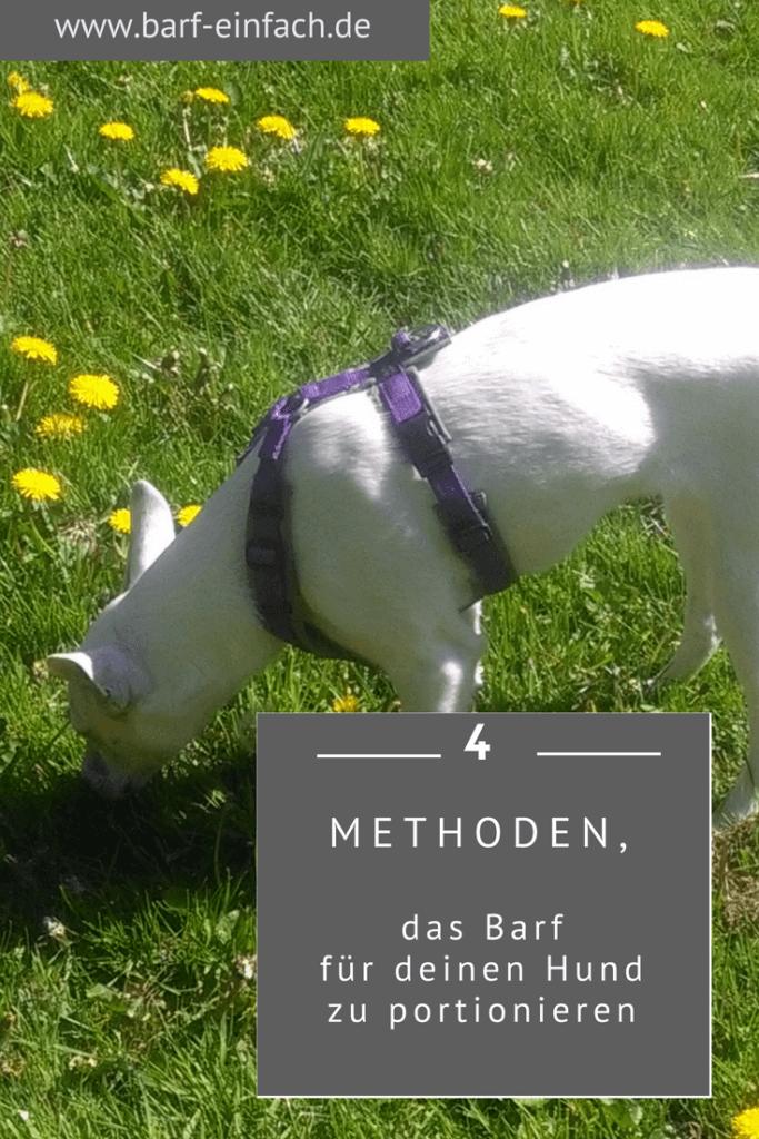 4 Methoden, dass Barf für deinen Hund zu portionieren
