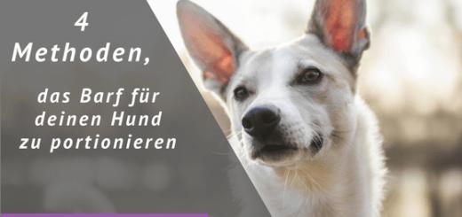 4 Methoden, das Barf für deinen Hund zu portionieren
