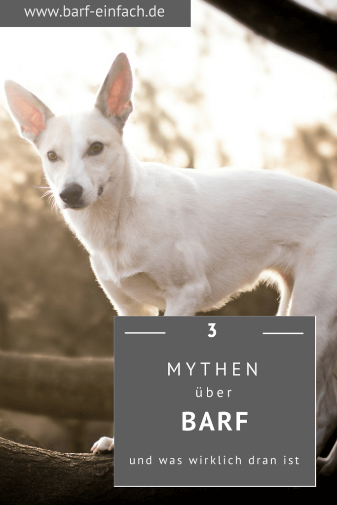 3 Mythen über Barf - und was wirklich dran ist; Hund auf einem Ast