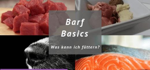 Barf basics Was kann ich füttern? Fleisch, Futternapf, Fisch, Hundeschnauze