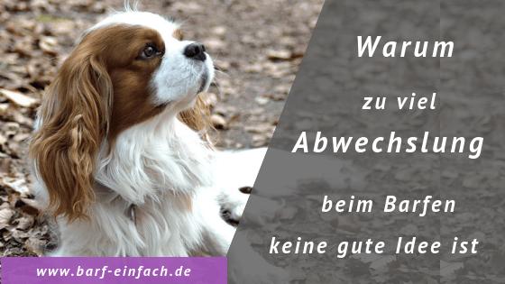 Titelbild Hund Text: Warum zu viel Abwechsung beim Barfen keine gute Idee ist