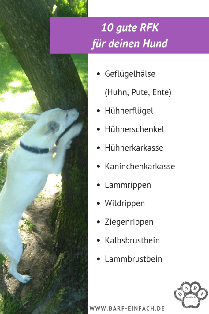 Barf basics Übersicht RFK, Hund am Baum