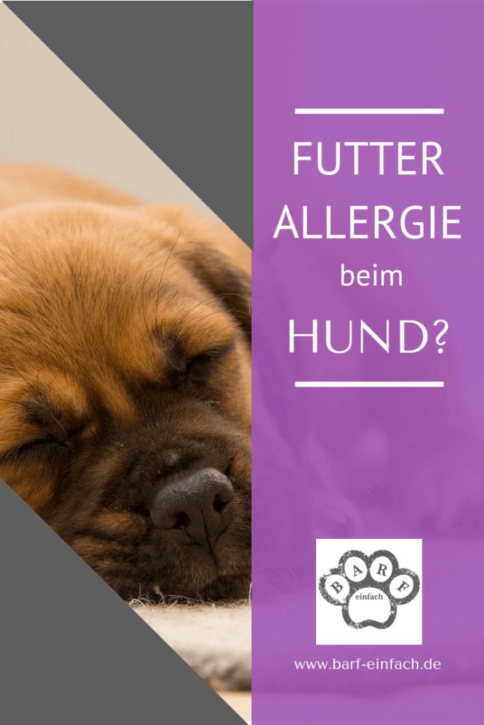 Text Futtermittelallergie beim Hund, schlafender Hund