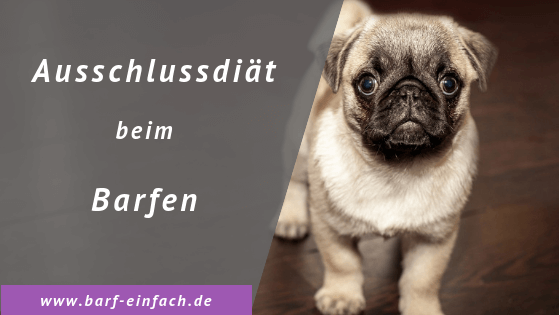 Titelbild Text Ausschlussdiät beim Barfen, Mops, Hund