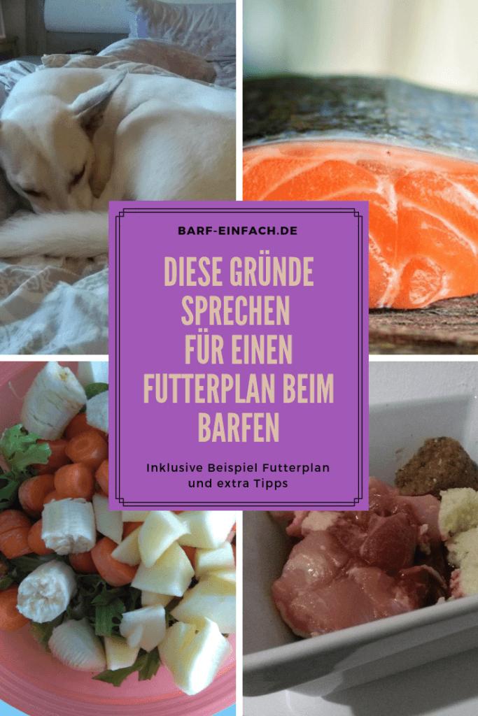 Text: Diese Gründe sprechen für einen Futterplan beim Barfen, Hund, Fleisch, Obst, Fisch