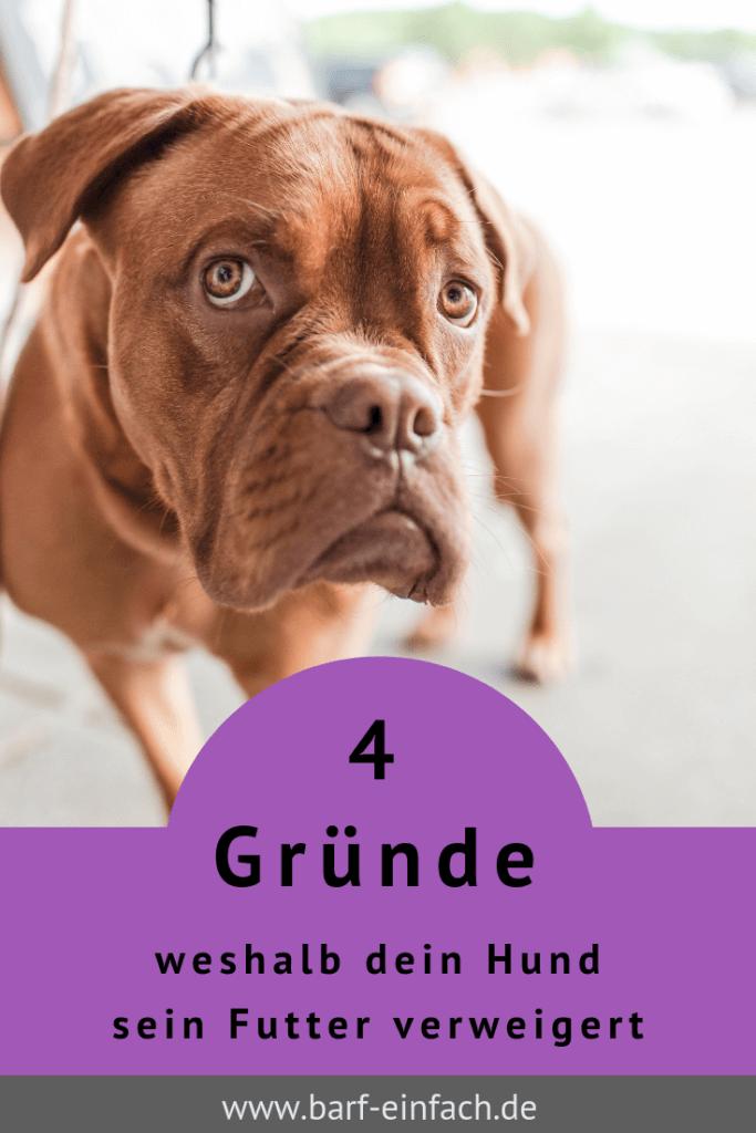 4 Gründe weshalb dein Hund sein Futter verweigert, brauner Boxer