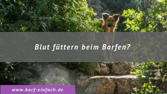 Text: Blut füttern beim Barfen, brauner Hund, Steinpfad, Gebüsch