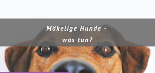 Text Mäkelige Hunde, Hundeschnauze