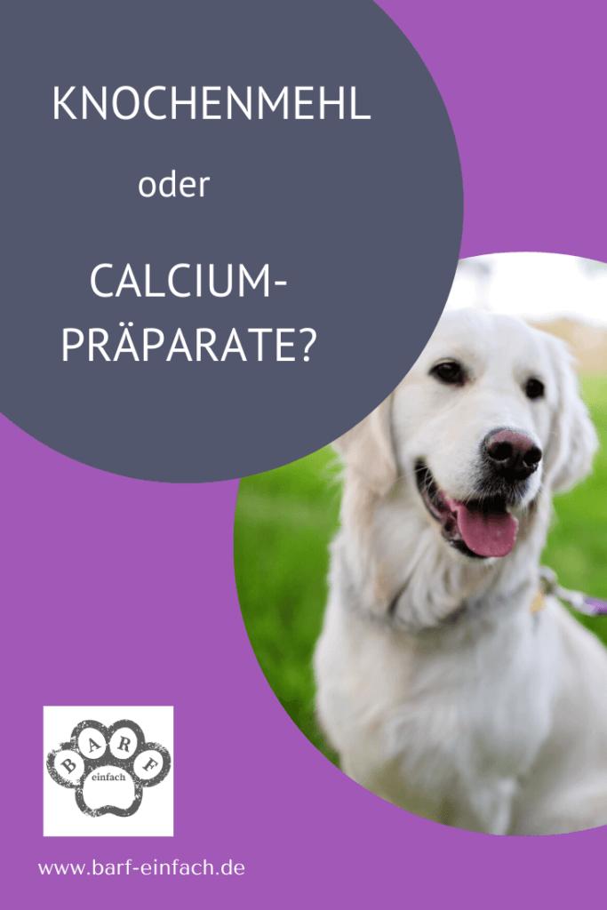 Hund, Golden Retriever, Text: Knochenmehl oder Calciumpräparate?
