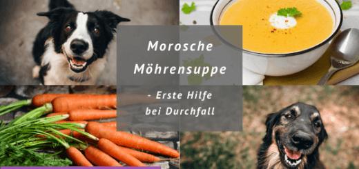 Titelbild Morosche Möhrensuppe